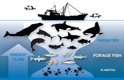 The Causes and Effects of Whaling